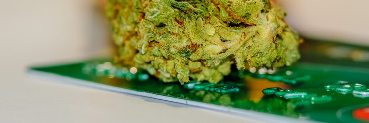 How To Choose The Right MMJ Merchant Account Solutions?